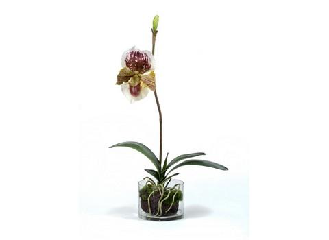 Орхидея Венерин Башмачок 52см