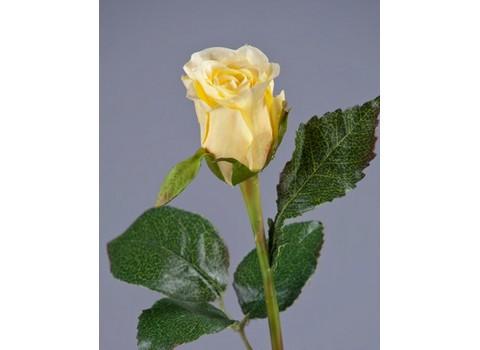 Роза Анабель 52 см