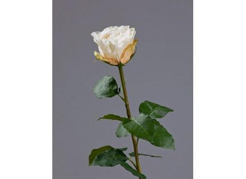Роза Английская 66см