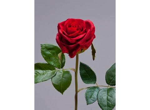 Роза Флорибунда Мидл 34см