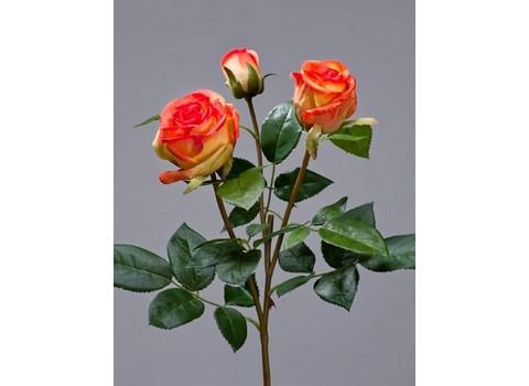 Роза Флорибунда Мидл ветвь 36см