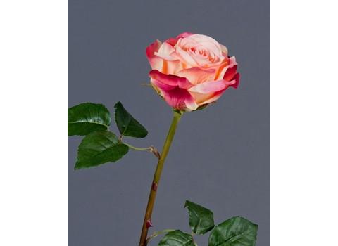 Роза Верди 58см